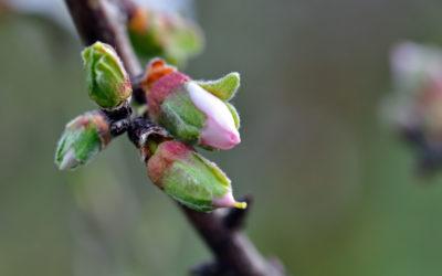 Ciesz się wiosną